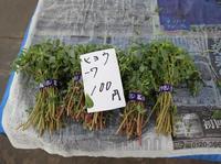鎌倉市農協連即売所の写真・動画_image_220056