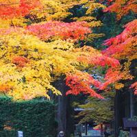光前寺の写真・動画_image_220383