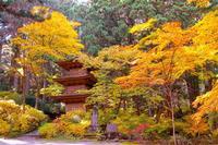 光前寺の写真・動画_image_220384