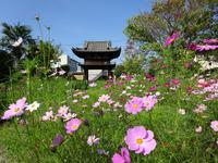 般若寺の写真・動画_image_222479