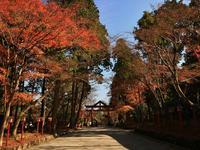 日吉大社の写真・動画_image_228856