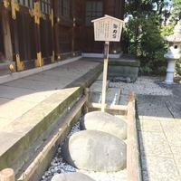 千葉神社の写真・動画_image_231150