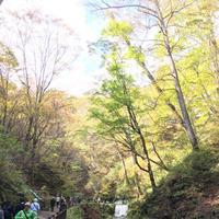 白糸の滝の写真・動画_image_231638