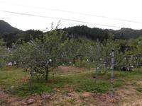 原観光りんご園の写真・動画_image_233599