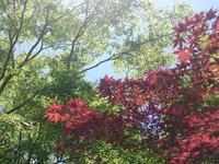 箱根湿生花園の写真・動画_image_234364