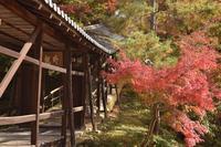高台寺の写真・動画_image_236463