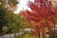 高台寺の写真・動画_image_236464