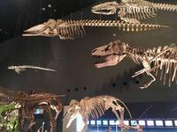 神奈川県立生命の星・地球博物館の写真・動画_image_238057