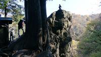 御岳山の写真・動画_image_238997