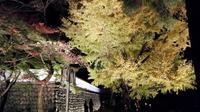 御岳渓谷の写真・動画_image_239003
