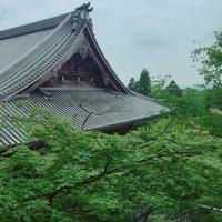 永観堂(禅林寺)の写真・動画_image_239292
