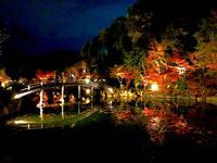 神勝禅寺 紅葉ライトアップ特別拝観の写真・動画_image_239585