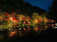 神勝禅寺 紅葉ライトアップ特別拝観の写真・動画_image_239586