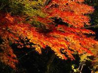 神勝禅寺 紅葉ライトアップ特別拝観の写真・動画_image_239587