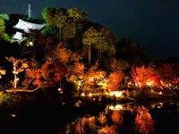 神勝禅寺 紅葉ライトアップ特別拝観の写真・動画_image_239588