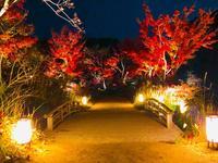 神勝禅寺 紅葉ライトアップ特別拝観の写真・動画_image_239589