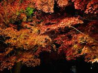 神勝禅寺 紅葉ライトアップ特別拝観の写真・動画_image_239590