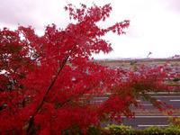 胡宮神社の写真・動画_image_240416