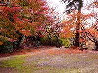 胡宮神社の写真・動画_image_240419