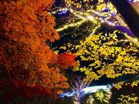 鳥取県立フラワーパークとっとり花回廊の写真・動画_image_241027