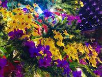 鳥取県立フラワーパークとっとり花回廊の写真・動画_image_241028