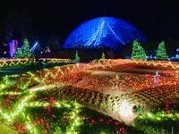 鳥取県立フラワーパークとっとり花回廊の写真・動画_image_241032