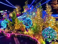 鳥取県立フラワーパークとっとり花回廊の写真・動画_image_241035