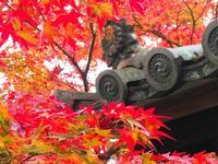 蓮華寺の写真・動画_image_241244