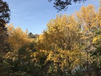 県立 三ツ池公園の写真・動画_image_242144