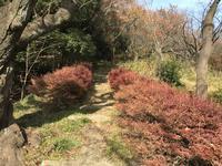 県立 三ツ池公園の写真・動画_image_242145