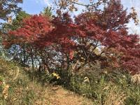 県立 三ツ池公園の写真・動画_image_242146