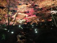 大田黒公園の写真・動画_image_244061