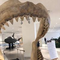 沖縄美ら海水族館の写真・動画_image_247125