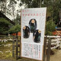上賀茂神社(賀茂別雷神社)の写真・動画_image_247605