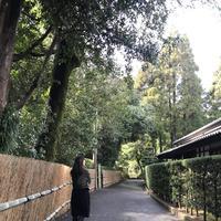 沈壽官窯の写真・動画_image_249796