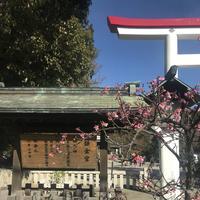鎌倉宮の写真・動画_image_250375