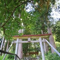 鎌倉神社の写真・動画_image_253281