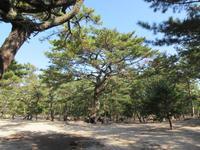 慶野松原の写真・動画_image_254810