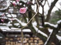 尾山神社の写真・動画_image_255288