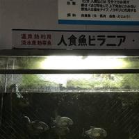 白池地獄の写真・動画_image_256014