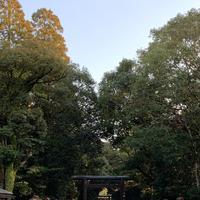 宮崎神宮の写真・動画_image_256155