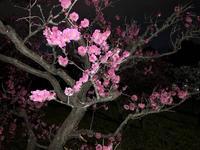 梅小路公園の写真・動画_image_258469