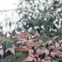 哲学の道の写真・動画_image_261360