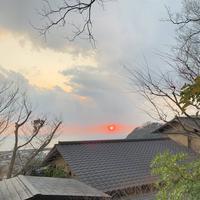 無雙庵枇杷の写真・動画_image_261523