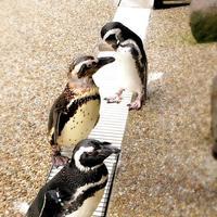 神戸市立須磨海浜水族園の写真・動画_image_262332