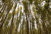 嵐山の写真・動画_image_263954