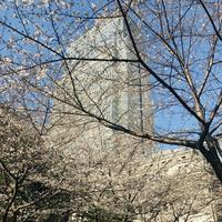 マンダリンオリエンタル東京の写真・動画_image_265543