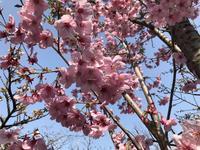京都府立植物園の写真・動画_image_267742
