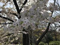 京都府立植物園の写真・動画_image_267743
