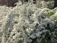 京都府立植物園の写真・動画_image_267745